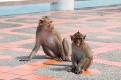 Affe, der Bodenfußweg spielt Lizenzfreies Stockbild
