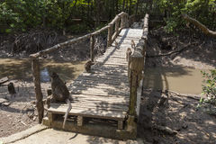 Affe an der Brücke Stockbild