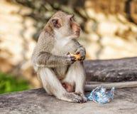 Affe, der Brot isst Stockbild