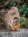 Affe, der das kleine Junge einzieht Stockfotografie
