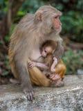 Affe, der das kleine Junge einzieht Stockbild