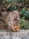 Affe, der das kleine Junge einzieht Lizenzfreies Stockfoto