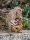 Affe, der das kleine Junge einzieht Lizenzfreies Stockbild