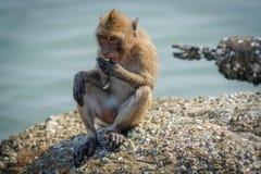Affe, der das Lebensmittel gegeben von den Touristen isst Lizenzfreie Stockbilder