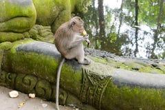Affe, der den Seeblick isst und genießt Lizenzfreies Stockfoto