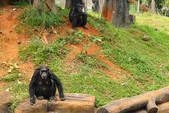 Affe, der an der Natur sitzt Lizenzfreie Stockfotos