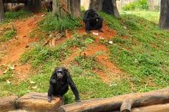 Affe, der an der Natur sitzt Lizenzfreies Stockbild