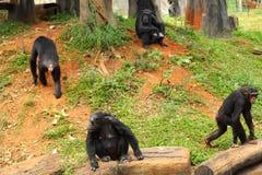 Affe, der an der Natur sitzt Stockfoto