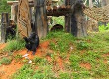 Affe, der an der Natur sitzt Stockfotografie