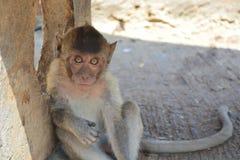 Affe, der die Kamera betrachtet Stockbilder