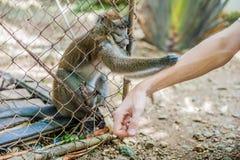 Affe, der durch die Stangen schaut Stockfotos