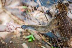 Affe, der durch die Stangen schaut Stockfotografie