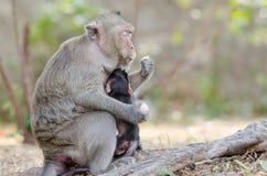 Affe, der Eier isst Lizenzfreies Stockbild