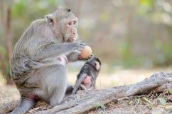 Affe, der Eier isst Lizenzfreie Stockfotografie