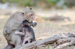 Affe, der Eier isst Stockbilder