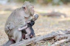 Affe, der Eier isst Stockbild
