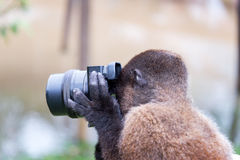 Affe, der ein Foto macht Lizenzfreie Stockfotografie
