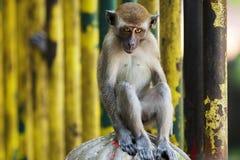Affe, der ein lustiges Gesicht macht Stockfotos
