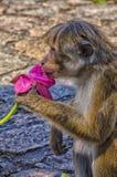 Affe, der eine Blume hält Stockfotografie