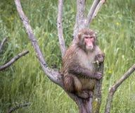 Affe, der in einem Baum stillsteht Stockfoto