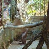 Affe, der in einem Käfigzoo sitzt Stockbild