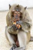 Affe, der einen Apfel isst Lizenzfreie Stockfotos
