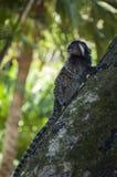 Affe, der einen Baum klettert Lizenzfreie Stockfotografie