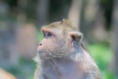 Affe, der einen Freund sucht Stockfotos