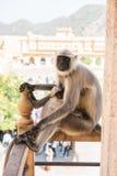 Affe, der entlang der Touristen anstarrt Lizenzfreie Stockfotografie