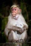 Affe der erwachsenen Frau, der herum schaut Lizenzfreie Stockfotos
