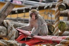 Affe, der für den Fotografen aufwirft Stockbilder