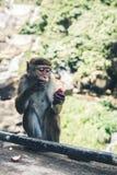 Affe, der Frucht gegen unscharfen grünen Hintergrund isst Stockfotos