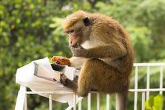 Affe, der gestohlen wird und einen Kuchen gegessen ist Stockfotografie