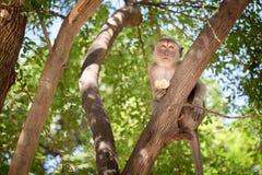 Affe, der glücklich auf einem Baum sitzt Lizenzfreie Stockbilder