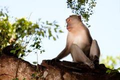 Affe, der glücklich auf einem Baum sitzt Stockbilder