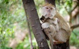 Affe, der glücklich auf einem Baum sitzt Lizenzfreies Stockbild