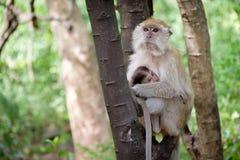 Affe, der glücklich auf einem Baum sitzt Stockfotografie