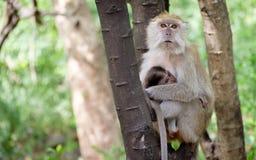 Affe, der glücklich auf einem Baum sitzt Lizenzfreies Stockfoto