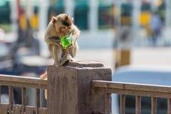 Affe, der grünen Sirup auf dem Pfosten isst Lizenzfreies Stockbild