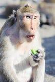 Affe, der Gurken isst Lizenzfreie Stockbilder