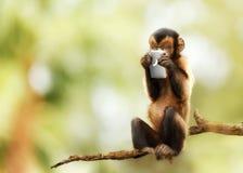 Affe, der am Handy simst Stockbilder