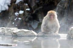 Affe, der Heißwasser aufpasst Stockfoto
