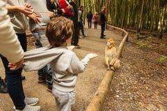 Affe, der herum in Salem, Deutschland schaut Lizenzfreie Stockbilder