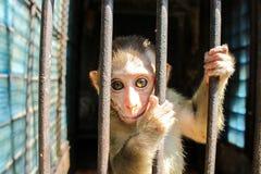Affe, der hinter Gittern sitzt Stockbild
