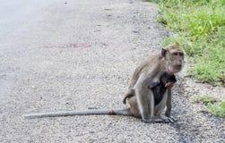 Affe, der ihr Baby hält Stockfoto