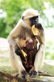 Affe, der ihr Baby und selbst einzieht Lizenzfreie Stockfotos