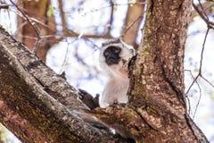 Affe, der im Baum sitzt Lizenzfreie Stockfotos