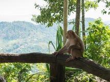 Affe, der im Dschungel sitzt Stockbild