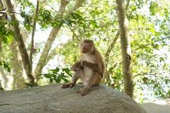 Affe, der im Dschungel sitzt Lizenzfreies Stockfoto