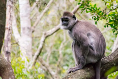 Affe, der im Dschungel sitzt Stockfotos